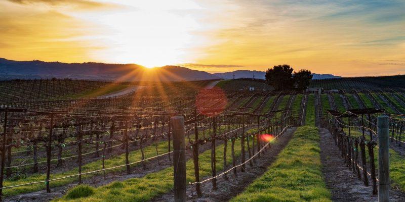 A Visit to Biltmore Winery | Take a Trip to Biltmore Winery | What You Can do at Biltmore Winery | Biltmore Winery Review | Biltmore Winery | #winetravel #wine #Biltmore