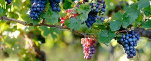 About Aspiring Winos