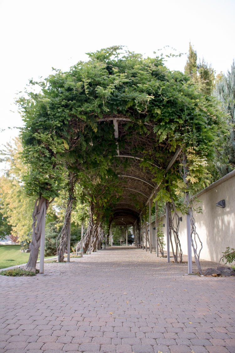 Tri-Cities Road Trip - Covered Vine Walkway at Terra Blanca