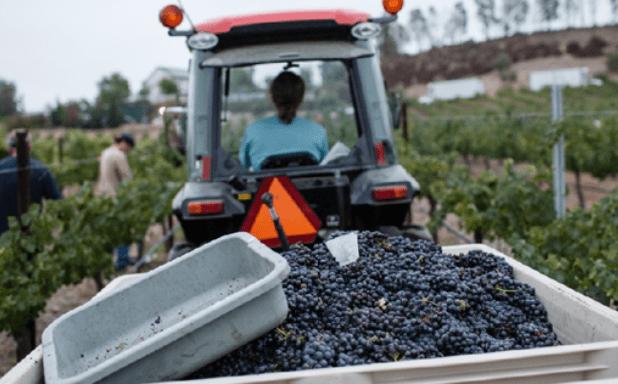 Vindemia Winery| Where to Go Wine Tasting in Temecula