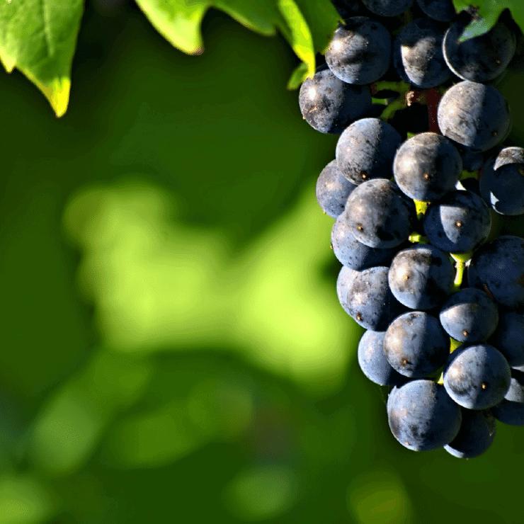 Boxwood Winery Middleburg, Virginia