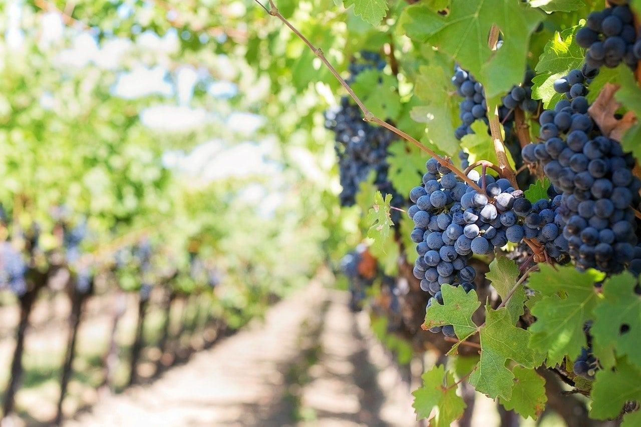 Del Vino Vineyards