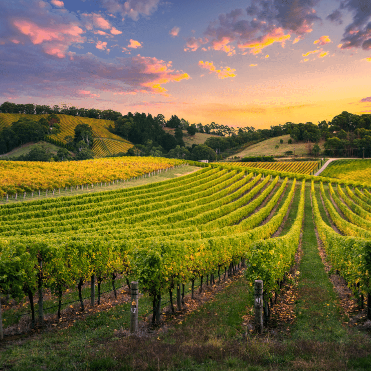 Big Cork vineyards wine country Washington DC