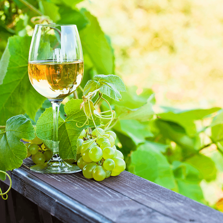 Wine Horse Winery Hammonton New Jersey